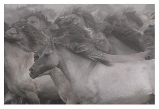 dieter-uhlig-wildhorses
