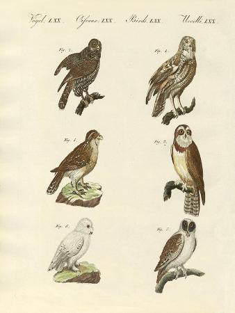 different-kinds-of-foreign-owls