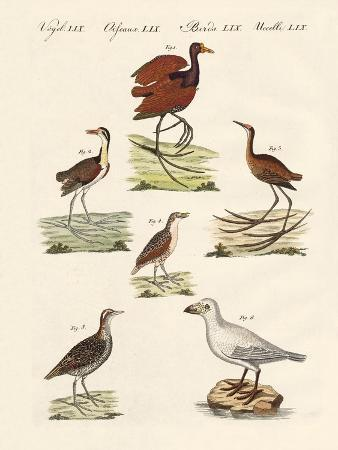 different-kinds-of-marsh-birds