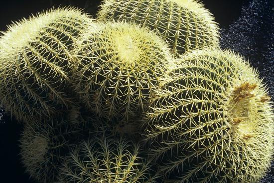dirk-wiersma-ferocactus-cactus