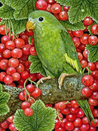 ditz-redcurrant-parakeet-1995