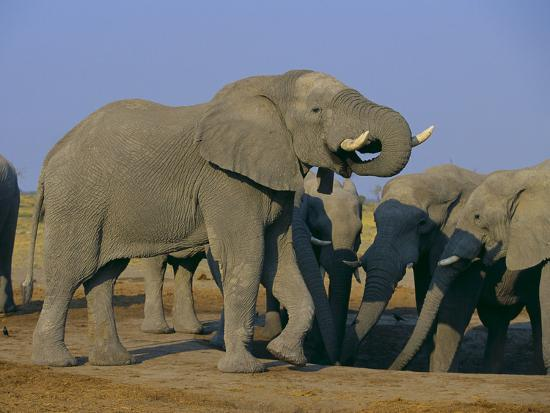 dlillc-african-elephant-herd-at-watering-hole