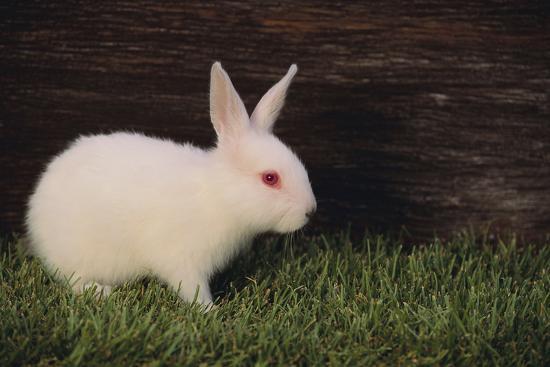 dlillc-baby-rabbit