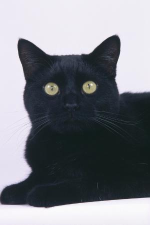 dlillc-black-cat