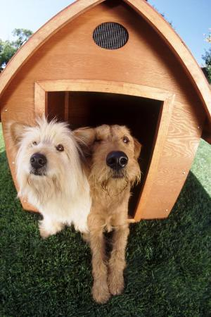 dlillc-dogs-sharing-a-house