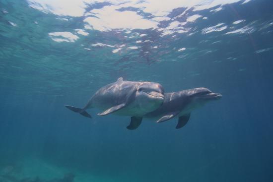 dlillc-dolphins