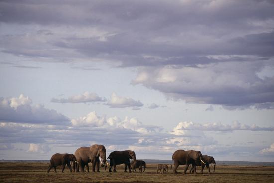 dlillc-elephant-family