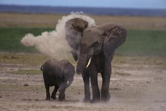 dlillc-elephant-mother-dust-bathing-herself-and-baby