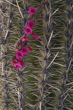 dlillc-flowers-on-cactus