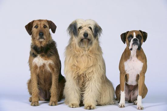dlillc-gang-of-dogs
