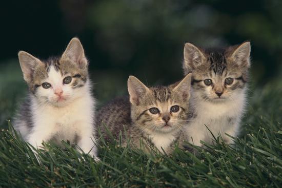 dlillc-kittens-sitting-in-grass