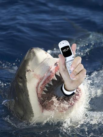dlillc-man-messaging-for-help-from-shark-s-mouth