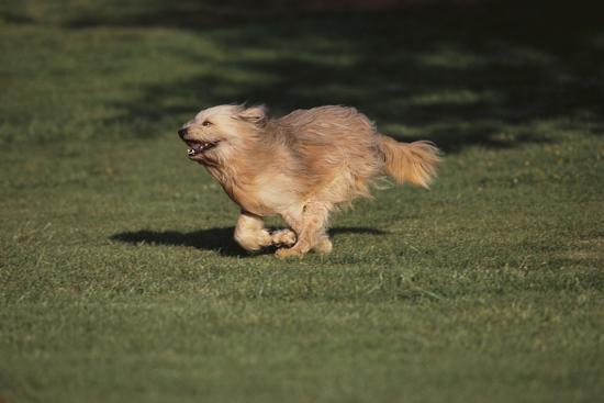 dlillc-mongrel-dog
