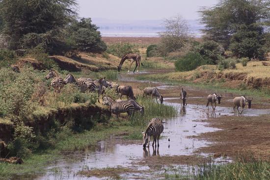 dlillc-multiple-species-drinking-at-a-river