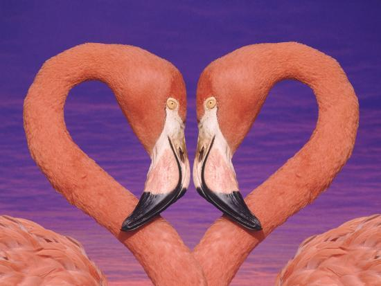 dlillc-pink-flamingos-in-love