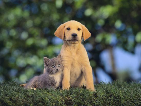 dlillc-puppy-and-kitten