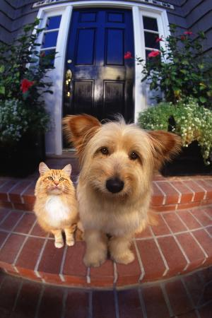 dlillc-terrier-and-orange-tabby-waiting-on-front-stoop