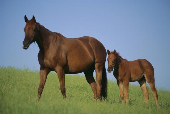 dlillc-thoroughbred-horse-and-colt