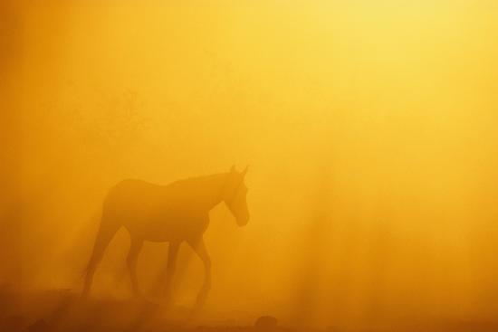dlillc-wild-horse