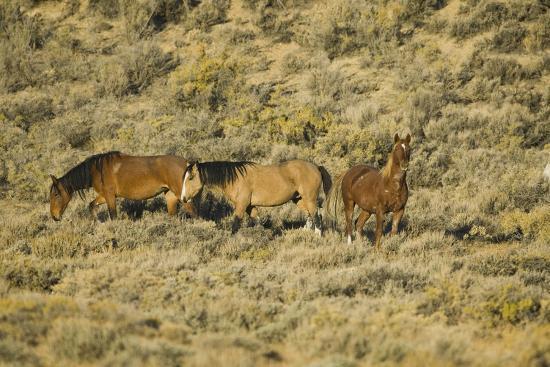 dlillc-wild-horses-on-the-range