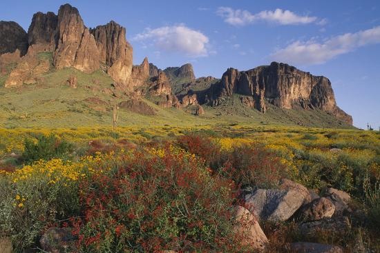 dlillc-wildflowers-and-cliffs-in-desert