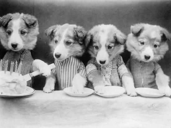 dog-s-birthday-party