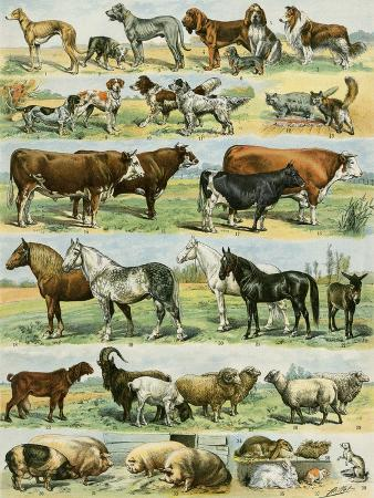 dogs-cats-cattle-horses-goats-sheep-hogs-and-other-domesticated-animals