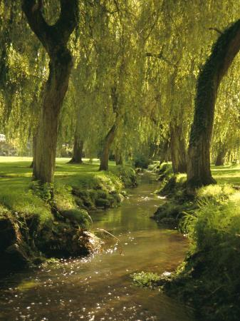 dominic-webster-willow-trees-by-forest-stream-new-forest-hampshire-england-uk-europe
