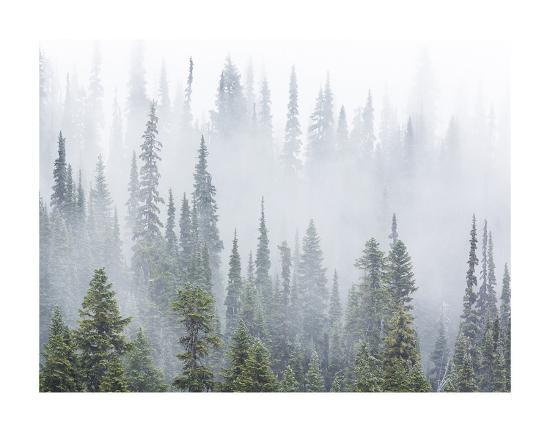 don-paulson-foggy-forest