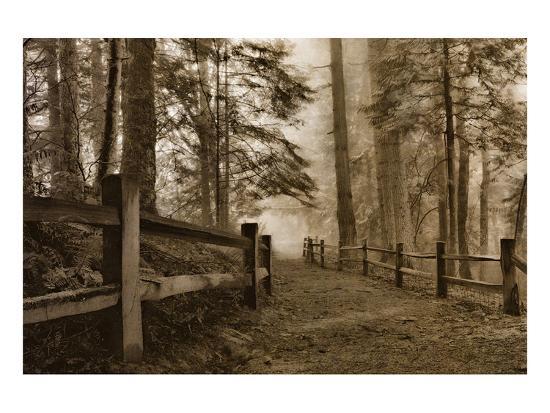 don-schwartz-schwartz-down-the-misty-path