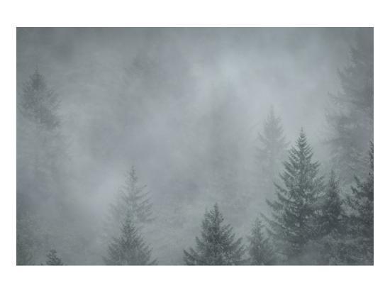 don-schwartz-schwartz-foggy-pines