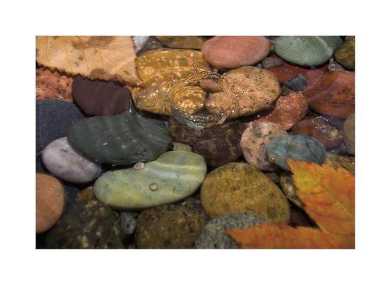 donald-paulson-splash-in-a-stream