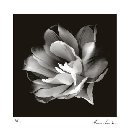 donna-geissler-radiant-tulip-ii