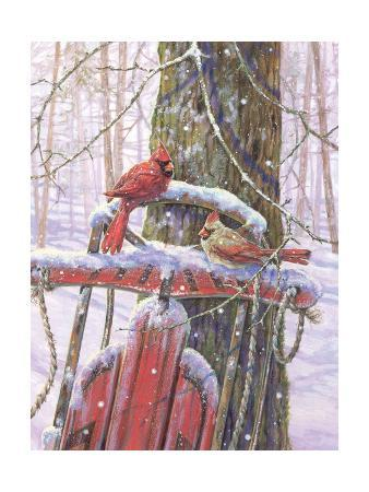 donna-race-red-sled-with-cardinals