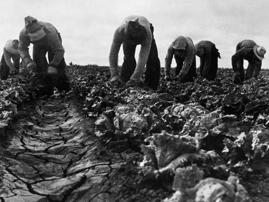 dorothea-lange-migrant-workers-1935