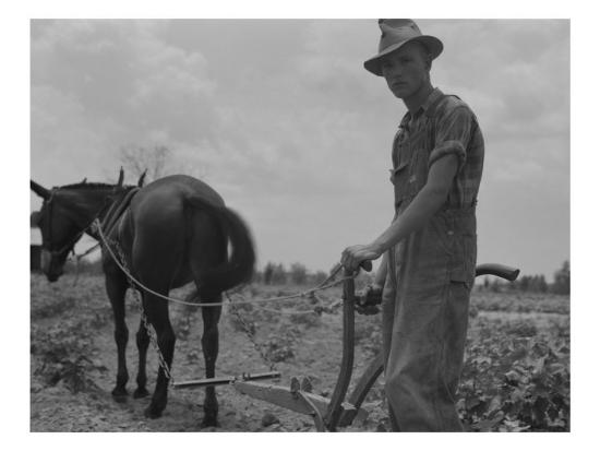 dorothea-lange-son-of-sharecropper-family-at-work-cultivating-a-cotton-field-chesnee-south-carolina-june-1937
