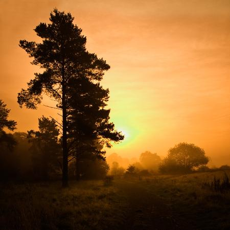 doug-chinnery-morning-glory