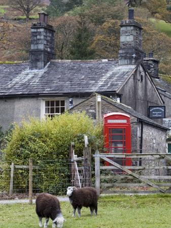 doug-pearson-herdwick-sheep-and-cottage-borrowdale-lake-district-cumbria-england