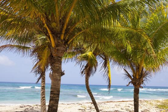 doug-pearson-long-bay-east-coast-portland-parish-jamaica-west-indies-caribbean-central-america