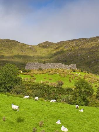 doug-pearson-sheep-grazing-near-staigue-stone-fort-on-the-iveragh-peninsula