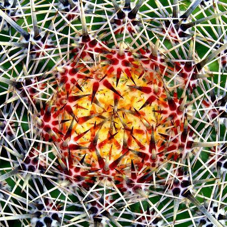 douglas-taylor-saguaro-mandala-ii