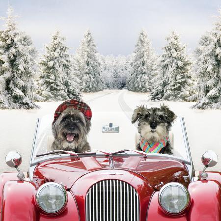 driving-car-through-a-snow-scene