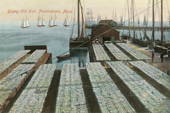 drying-cod-fish-provincetown
