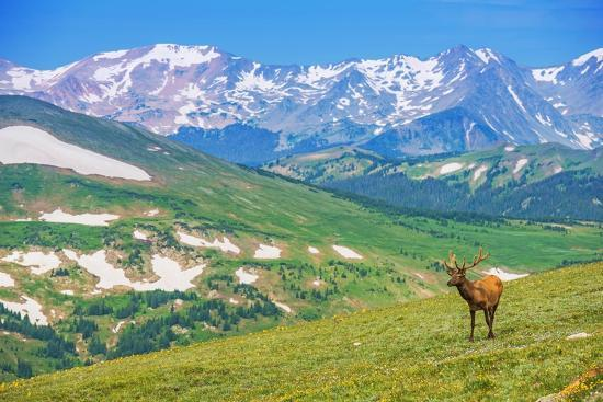 duallogic-lonely-elk-alpine-meadow