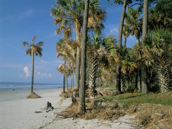 duncan-maxwell-sub-tropical-forest-and-coastline-hunting-island-state-park-south-carolina-usa