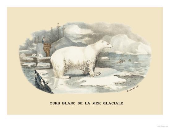 e-f-noel-ours-blanc-de-la-mer-glaciale