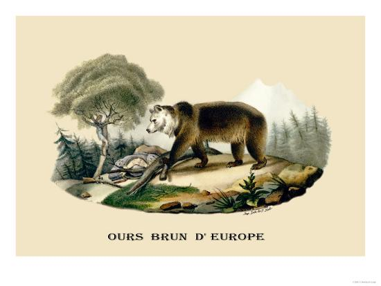 e-f-noel-ours-brun-d-europe