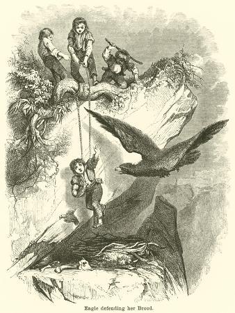 eagle-defending-her-brood
