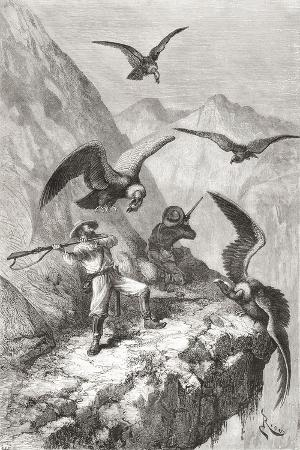 edouard-francois-andre-and-companion-being-attacked-by-condors-near-calacali