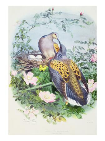 edouard-travies-a-pair-of-turtle-doves